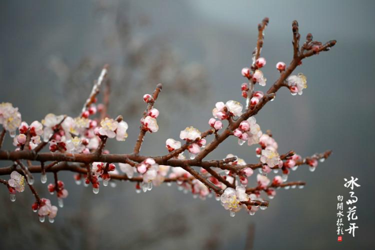 【林州摄影师白开水】冰雨花开