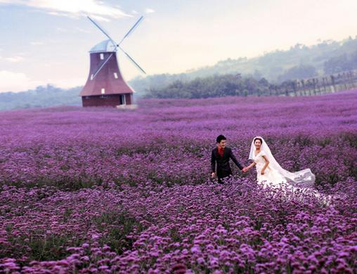 林州紫海情缘薰衣草庄园