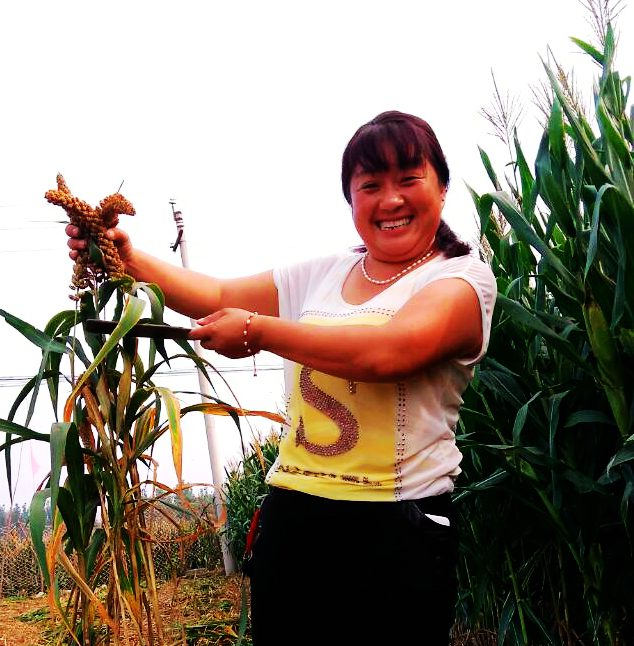 林州:小米喜丰收 农民脸上露幸福