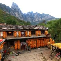 林州:入秋后的农家小院