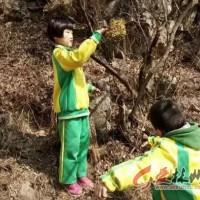 林州:小小少年,我为小鸟安个家