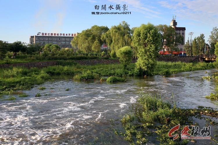 走进陵阳镇洹河湿地公园 - 白开水 - 林州白开水图片