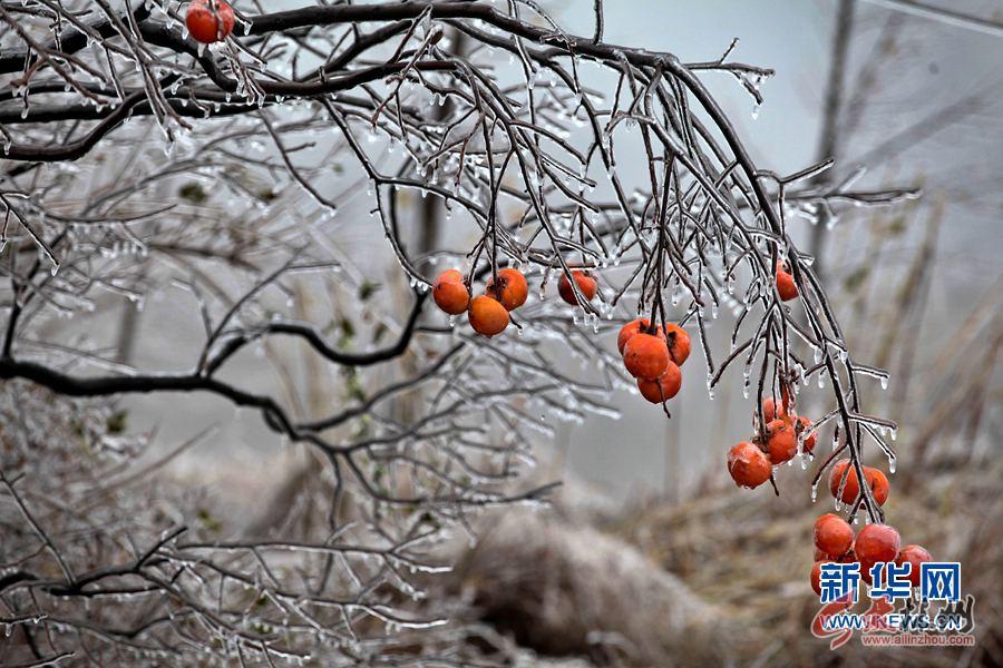 冬之语 冰之恋