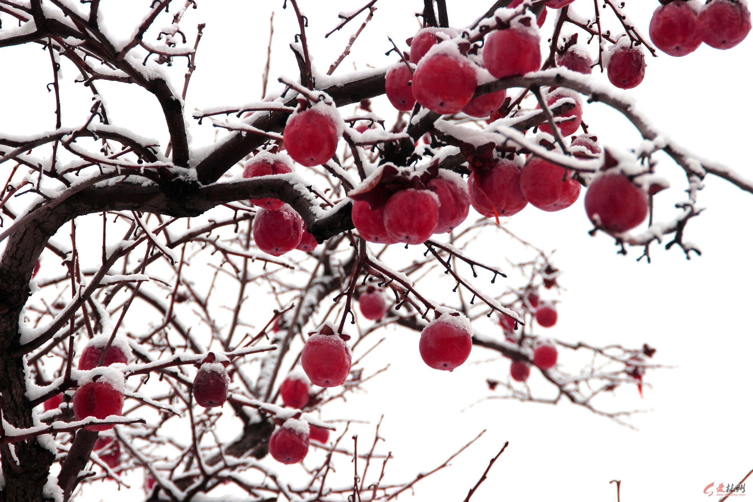 相约在冬季——大红灯笼高高挂_林州新闻网_爱林州网