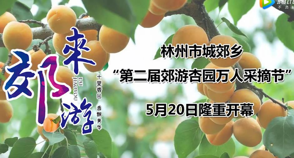 2017年5月20日林州城郊乡万人摘杏节
