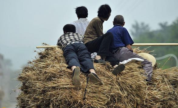 林州:农村一组手工收麦场景,见一次少一次