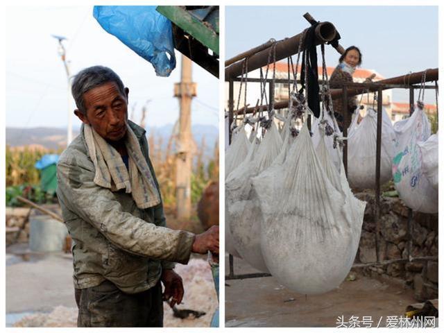 林州:老夫妇一条龙红薯加工过粉 一天可达两三万斤