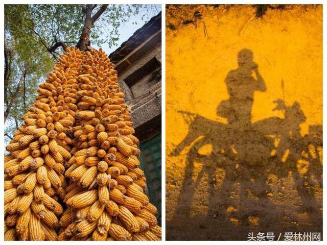 """林州:农家小院悬空""""黄金""""玉米 每摞都有上百斤"""